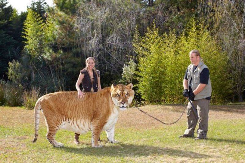 Фотографии животных высокого разрешения размеры