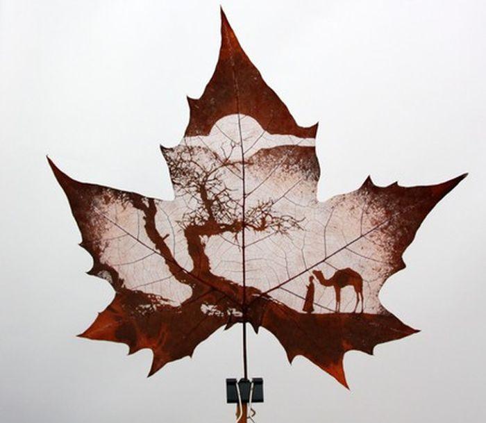интернета рисунки на листьях клена картинки касается формы улыбки