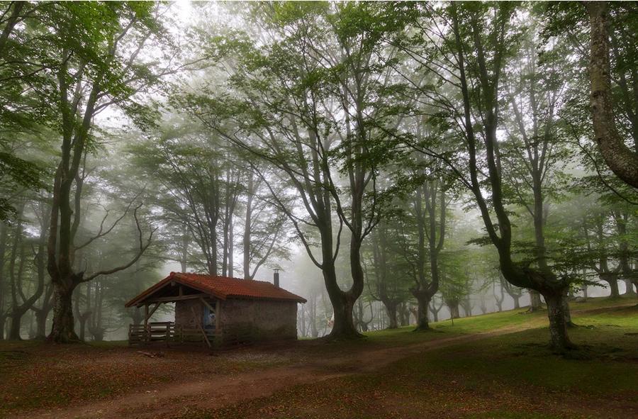 Самые красивые дома посреди леса