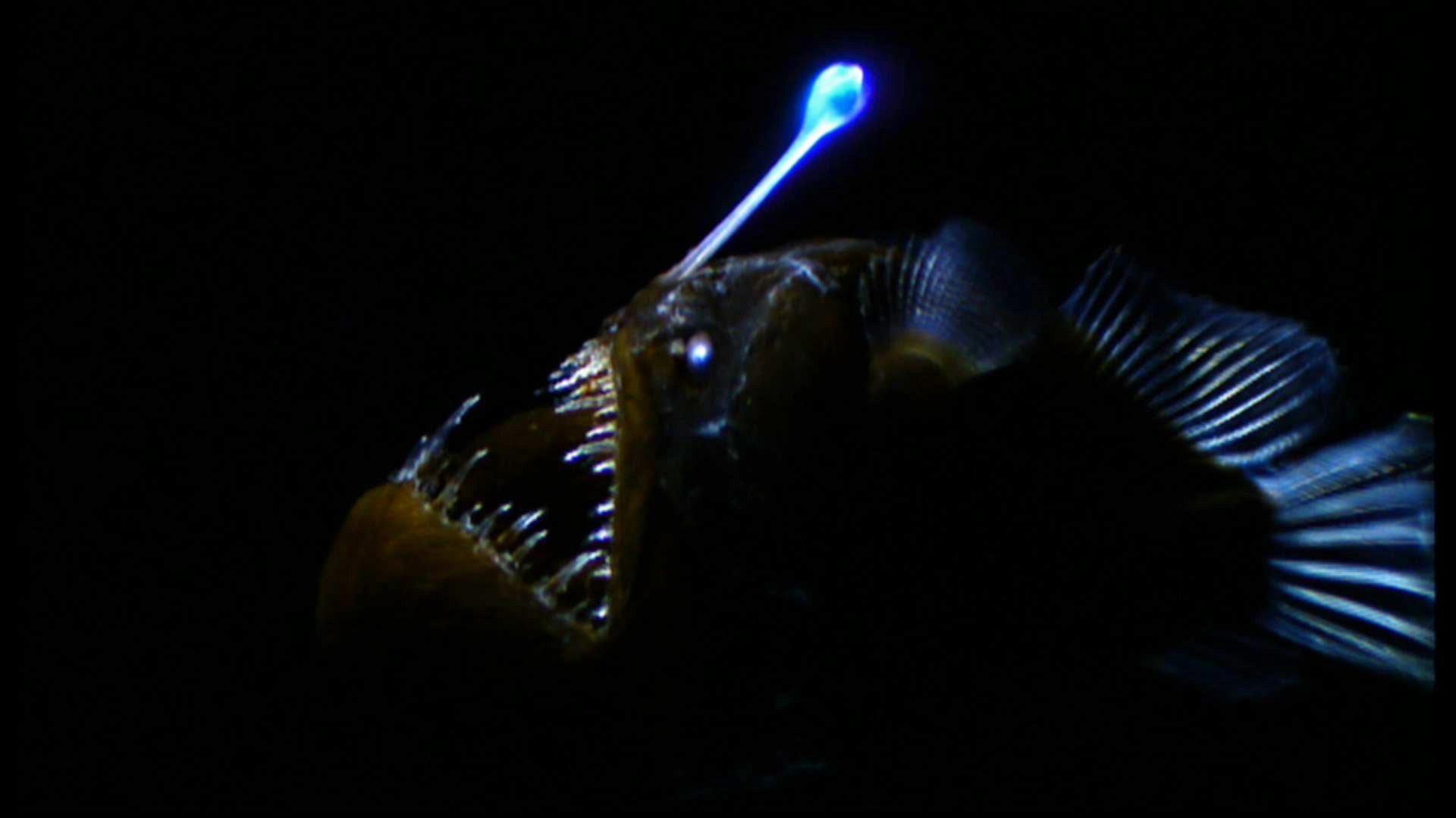 рыба в темноте светится