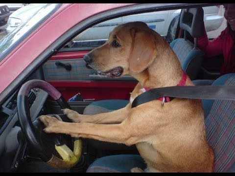 Intelligent Animals Funny Mini Compilation