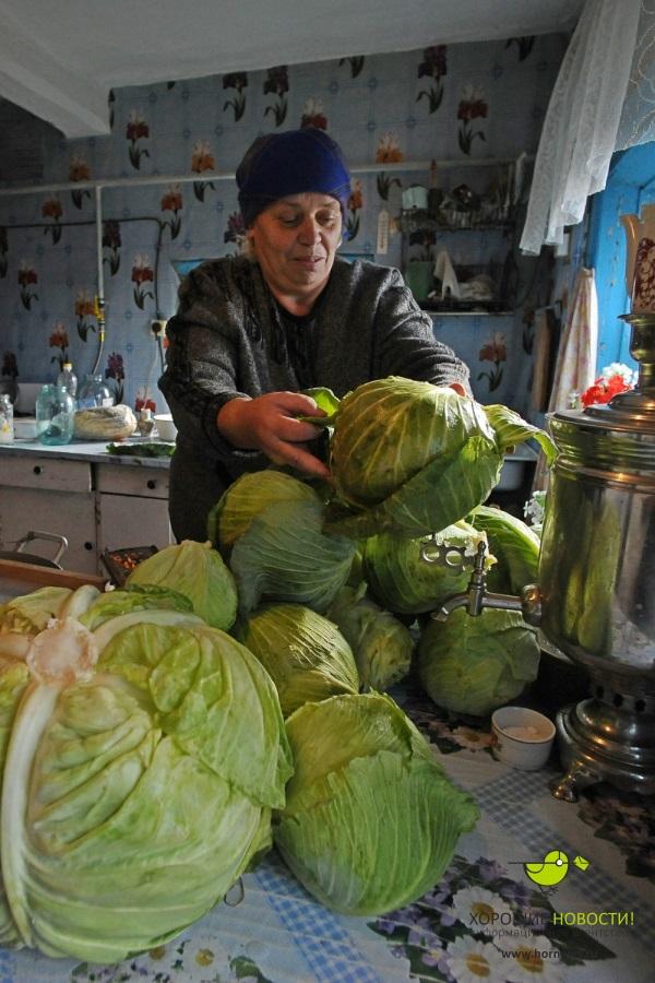 смешные картинки солим капусту