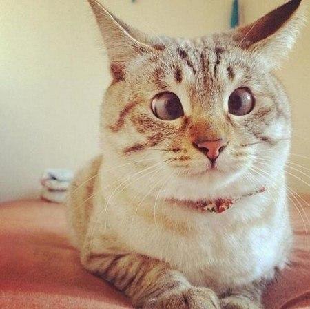 Франциска: что значит выражение у кошки 9 жизней последовательно конденсатором резонансный