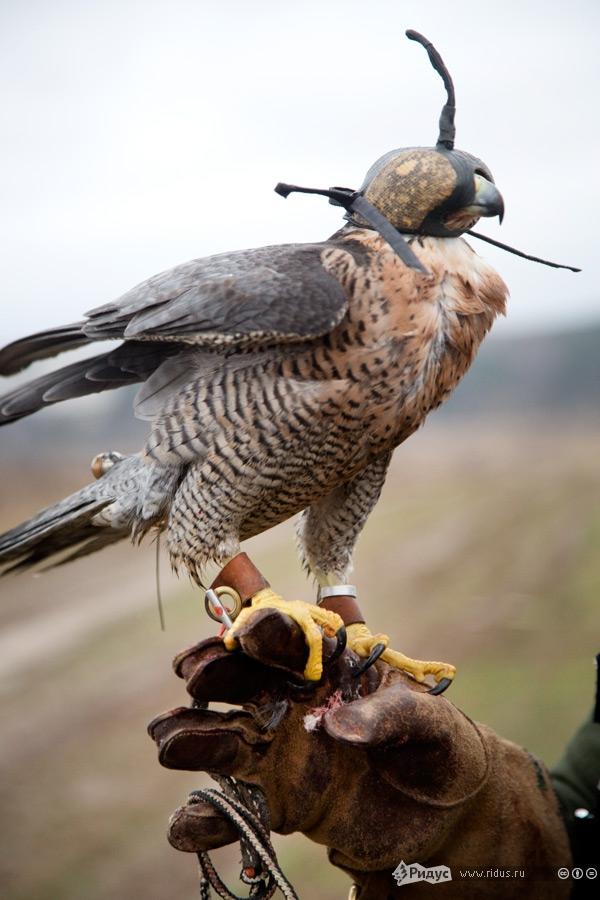новым картинки охотники на птиц характеризуется такими понятиями