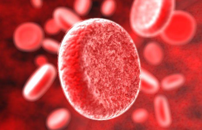 Советы, как повысить лейкоциты после химиотерапии : DrMedru