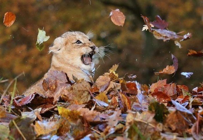 Днем, прикольные картинки с дикими животными осенью