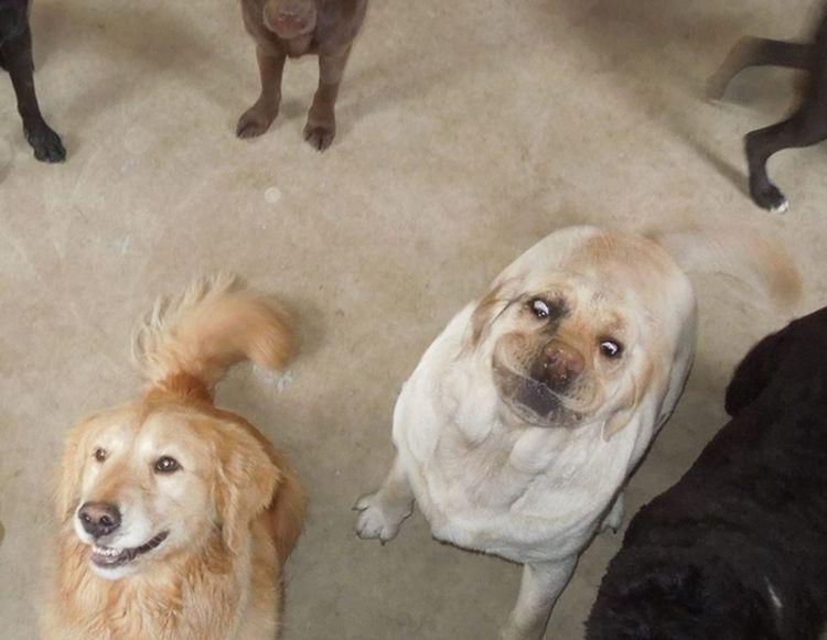 Картинки по запросу Смешные и забавные собаки