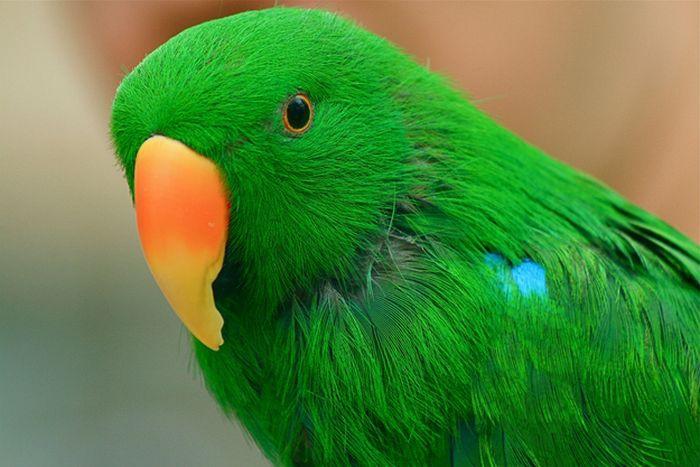 Попугай спас ребенка от удушья героизм, животные