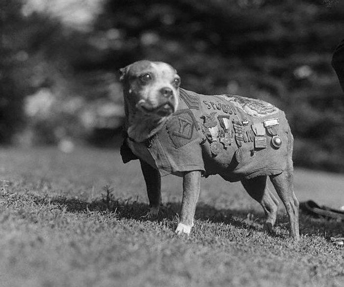 Сержант Стабби героизм, животные