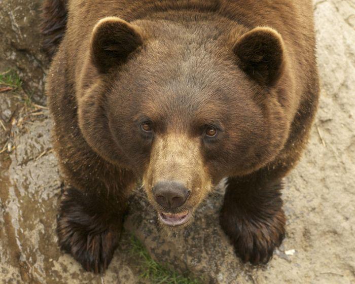 Медведь спас жизнь человеку героизм, животные