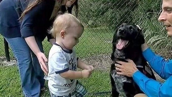 Киллиан, который спас 7-месячного ребенка от жестокого обращения героизм, животные