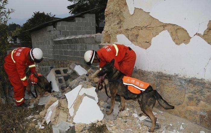 Собаки-спасатели, Китай героизм, животные