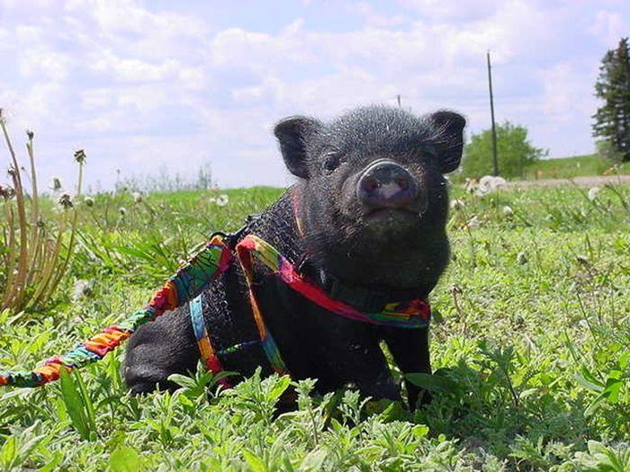 Лулу, спасшая жизнь своей хозяйке героизм, животные
