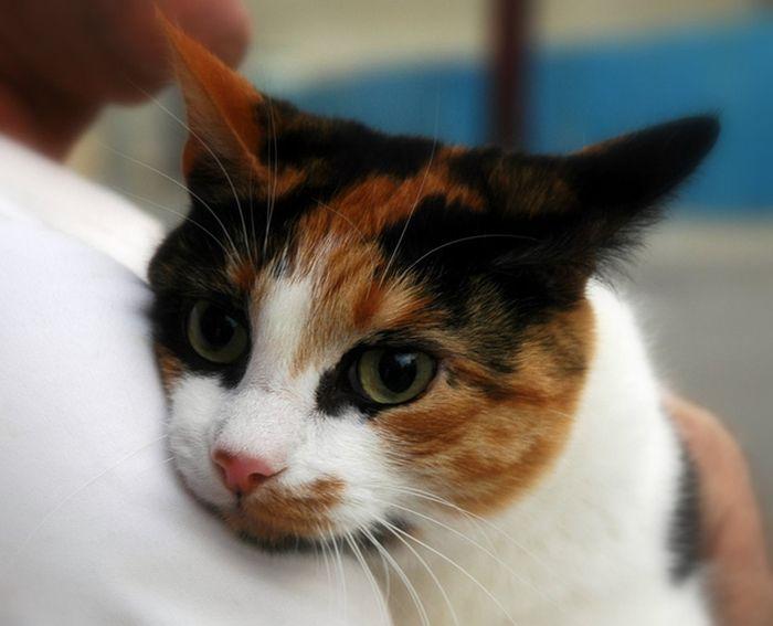 Кошка, определившая рак груди героизм, животные