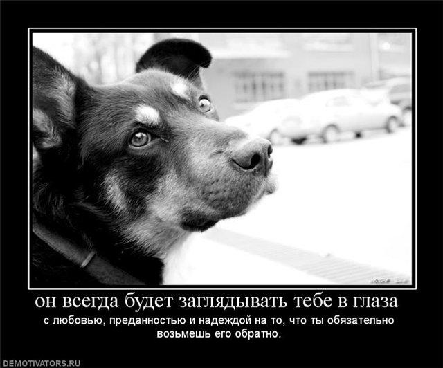 из-за демотиваторы про собак цитаты этого