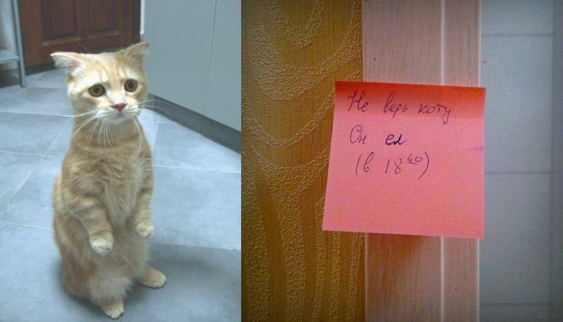 нестеренко картинка не верь коту его кормили юду