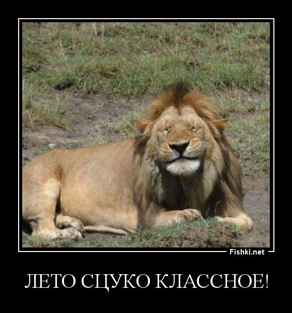 картинки лев с надписью мужики тогда и сейчач схема