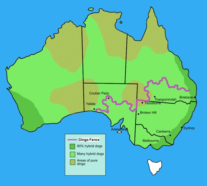 Картинки по запросу заборы в австралии фото