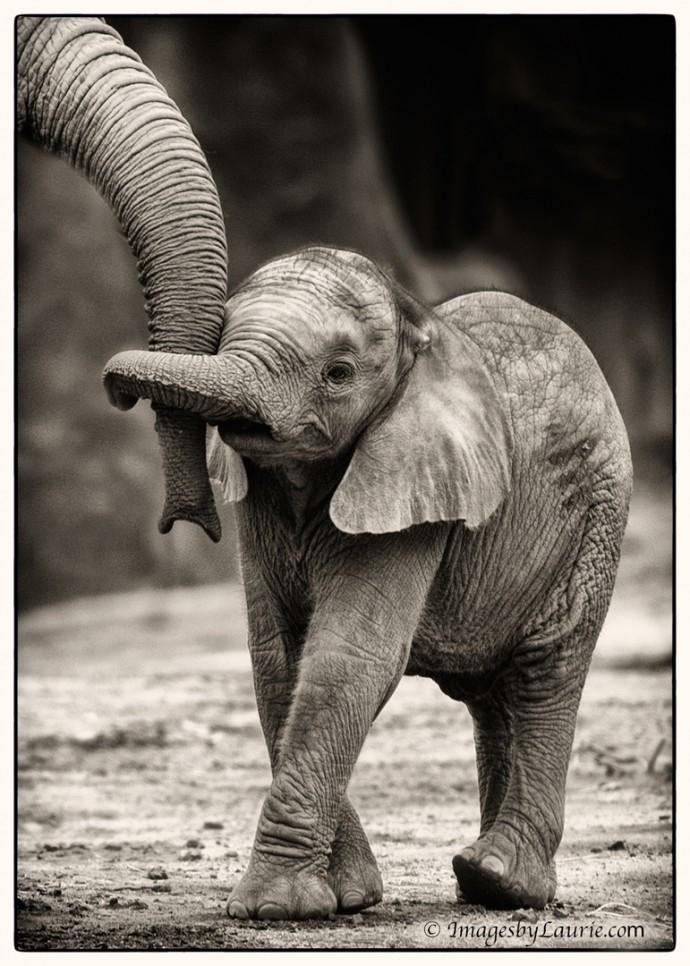 магазине прикольные картинки слонопотамов популярный