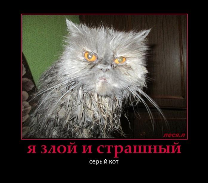 Злые коты демотиватор