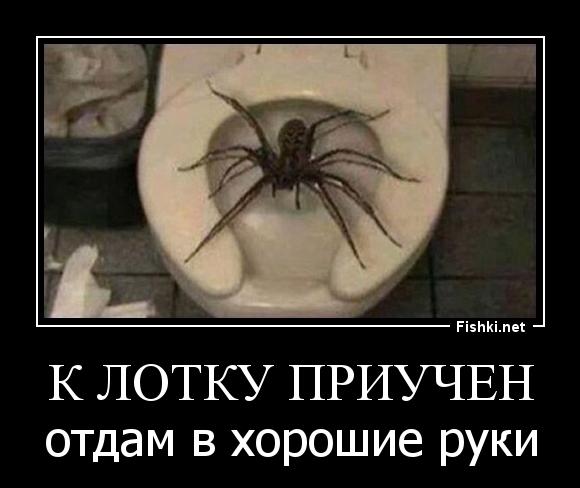 Смешная картинка у тебя паук