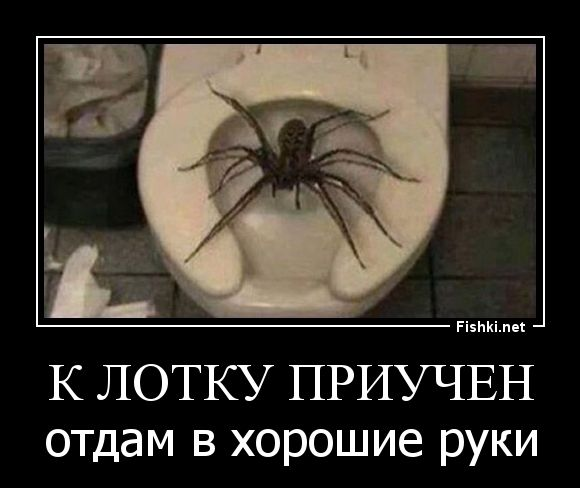 интересная демотиваторы про паук лучшие