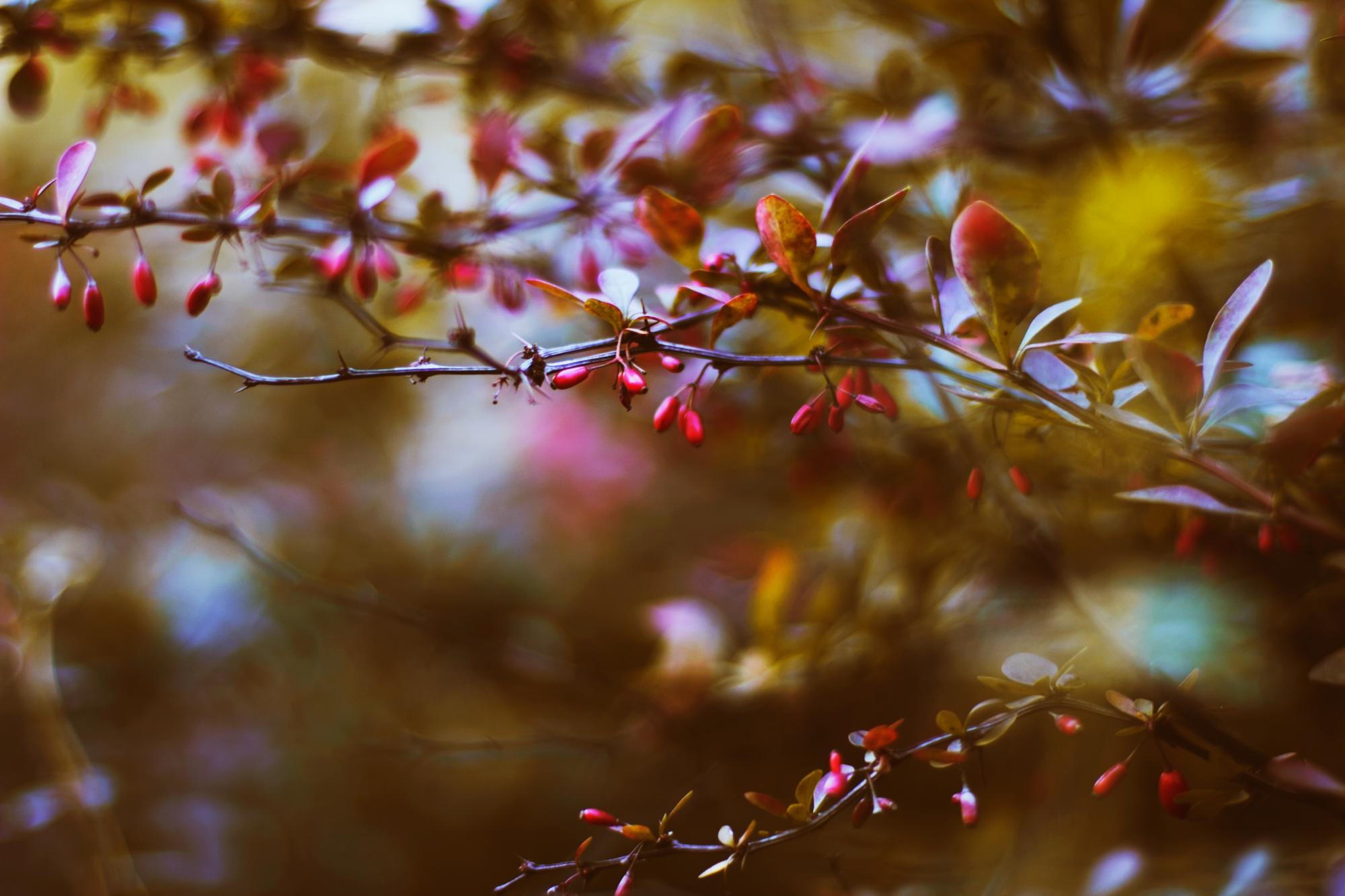 в ожидании весны картинки фото