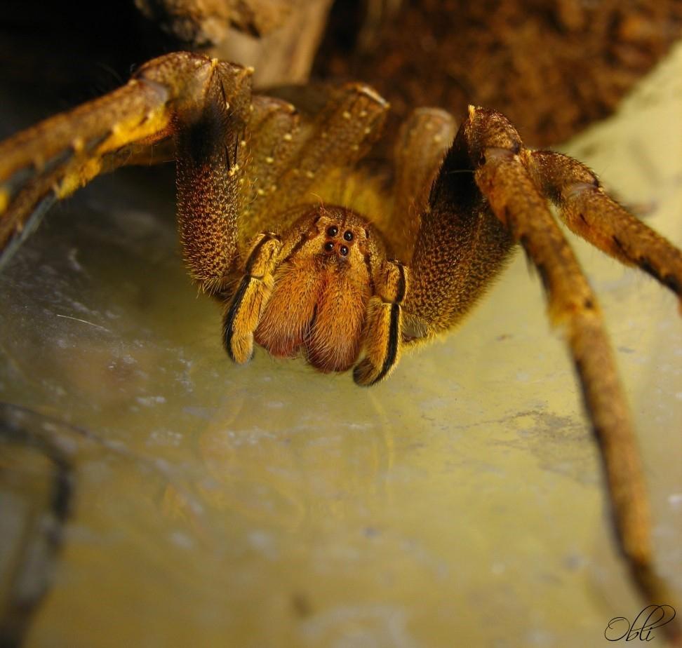 Смотреть картинки не ядовитых пауков