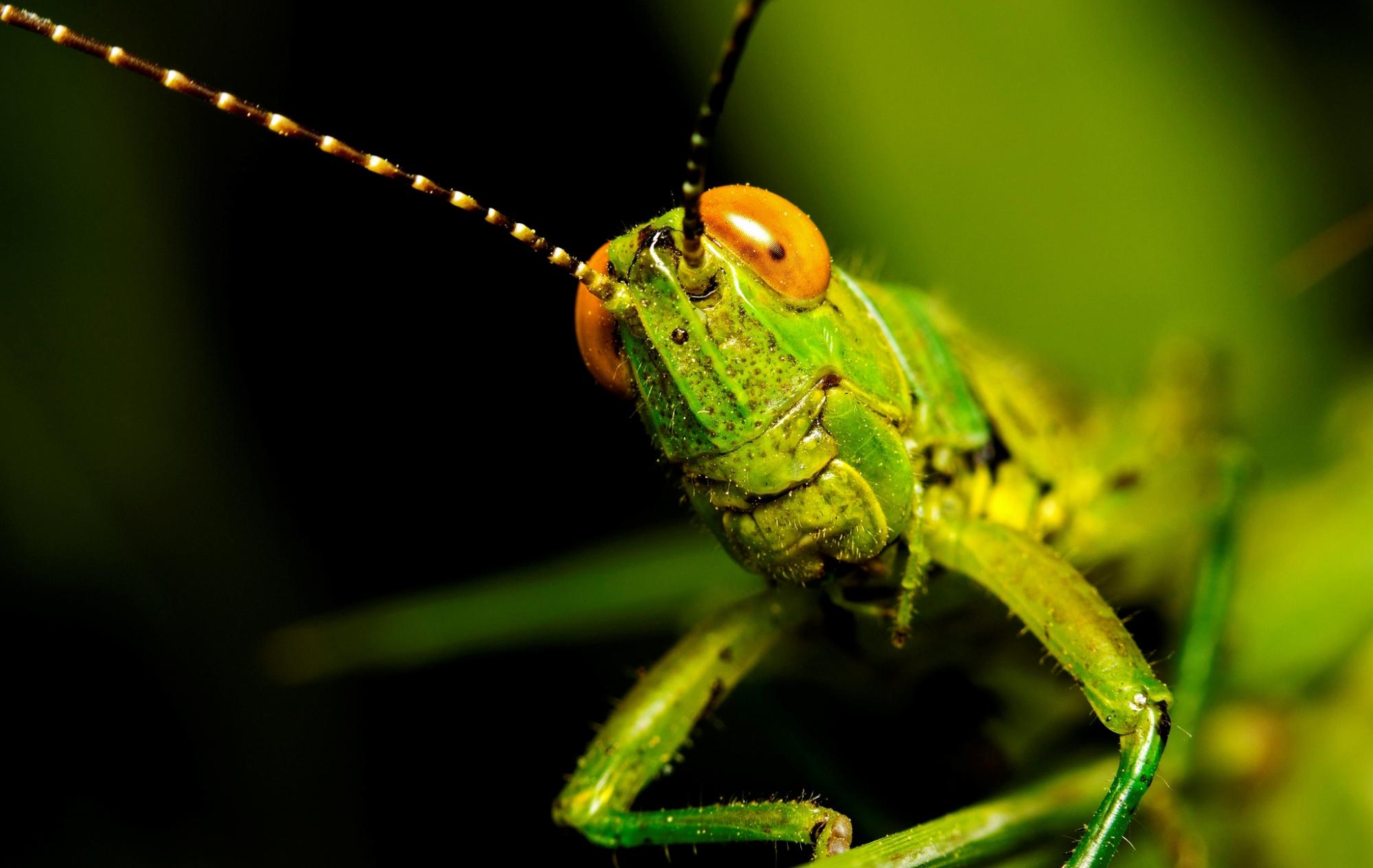 которые фотки насекомых разных таких колготок