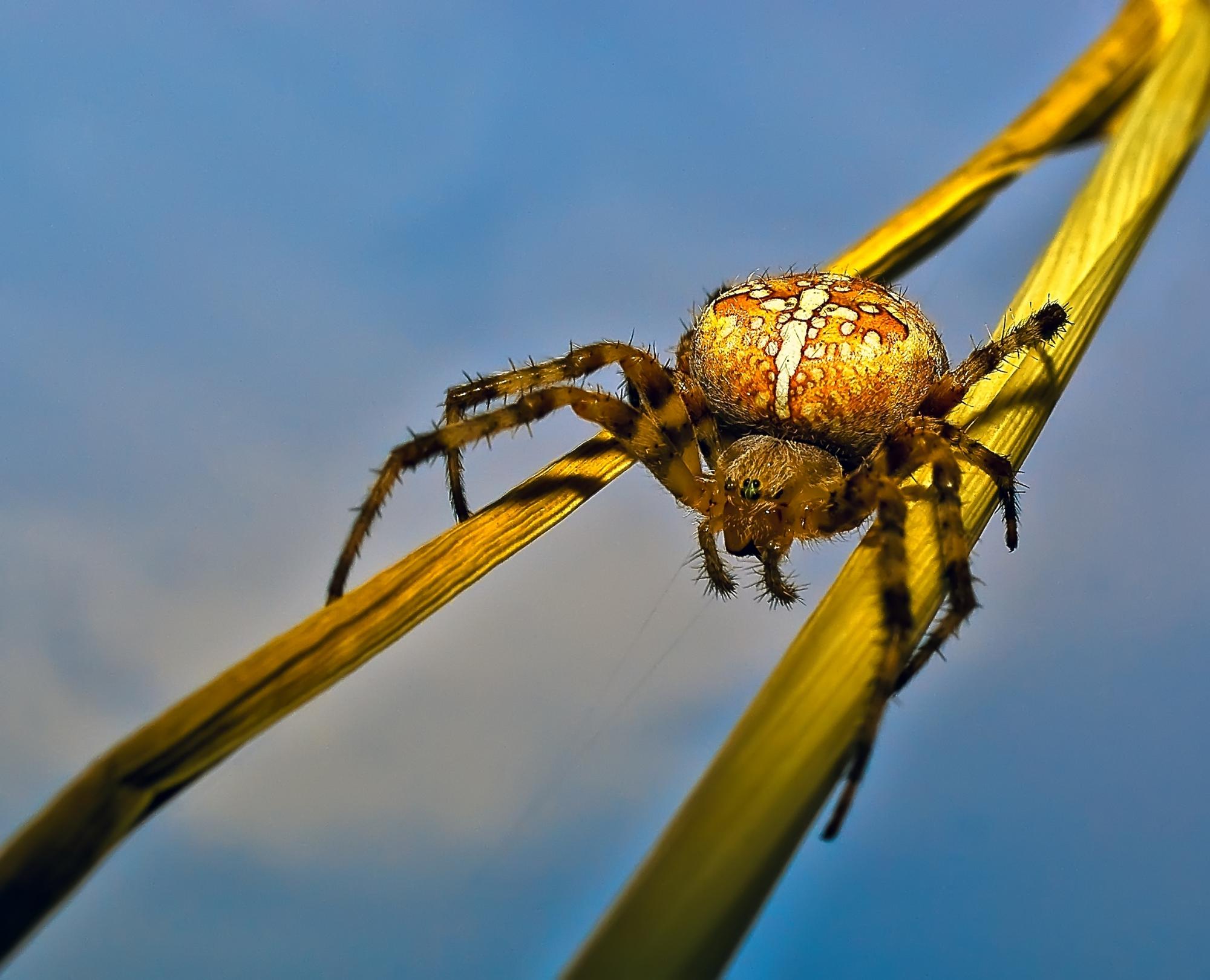 объявления пауки урала в картинках простому смоки