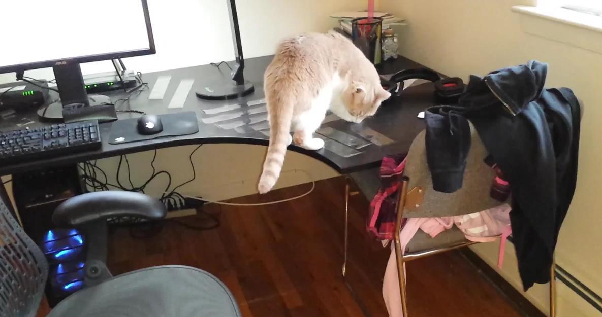 Видео случайно заснятое под столом