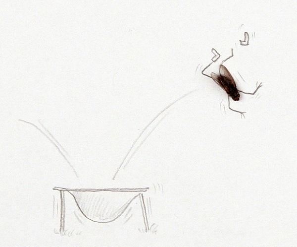 Картинки мух приколы, открытки летом снег