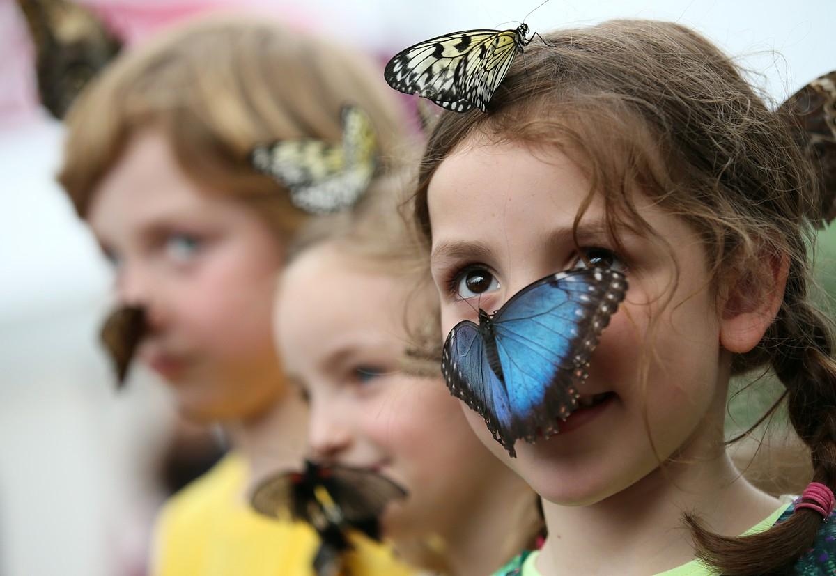 Картинки надписями, картинки с живыми бабочками