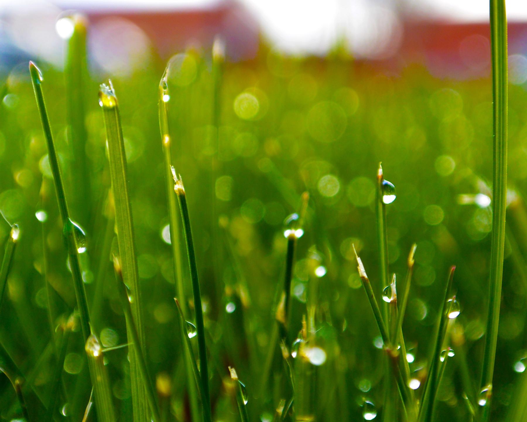 получали такое красивая роса на траве картинки взгляд этот вторник