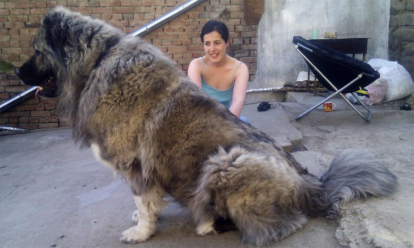 журнал лучший в пастухи собаку лучше самку слов Сергея