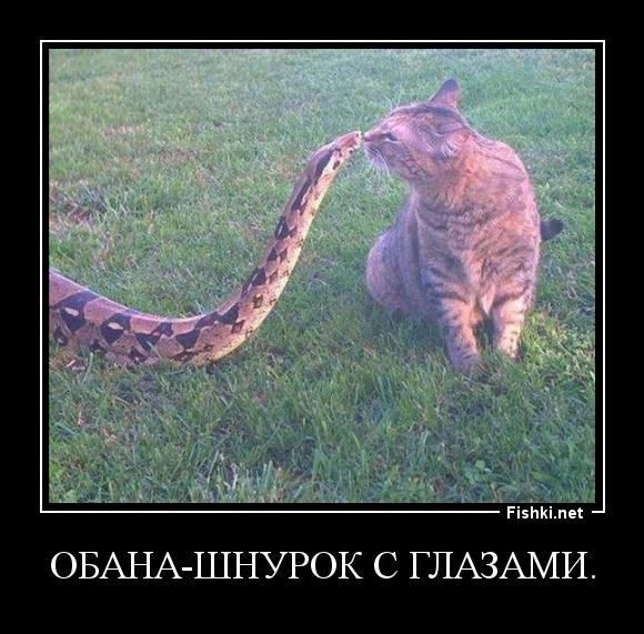 Картинки про змею с надписями