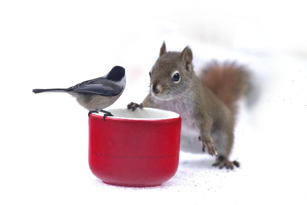 день угощения птиц и белок гиф зависимости того