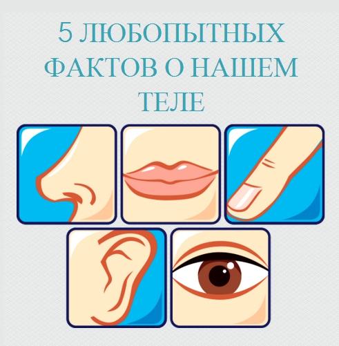 Пять фактов о нашем теле интересное, наука, пост, прикольно, рассказ, факты, человек