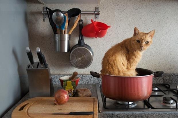 Гифка с котом когда готовка это не твоей