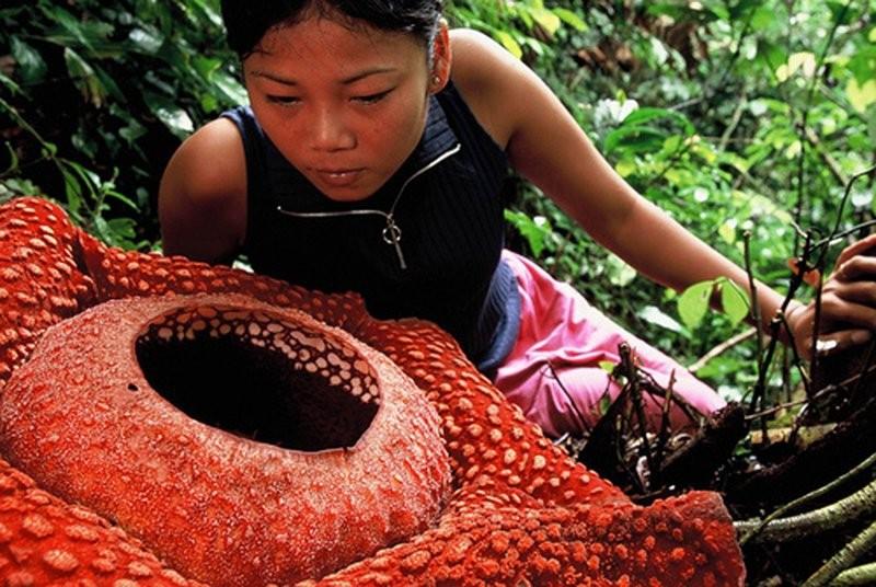 Самые редкие растения на Земле. Их вы не то что не видели, даже и не слышали!!!