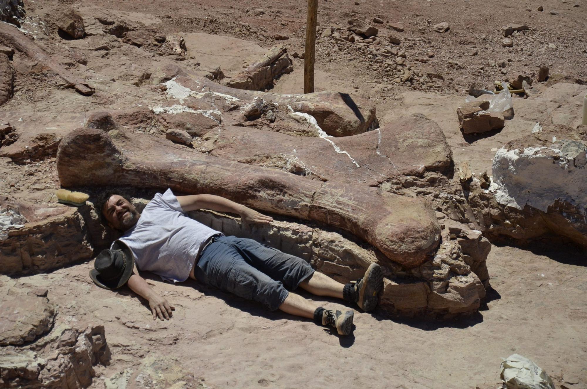 Картинки по запросу В Аргентине археологи нашли динозавра