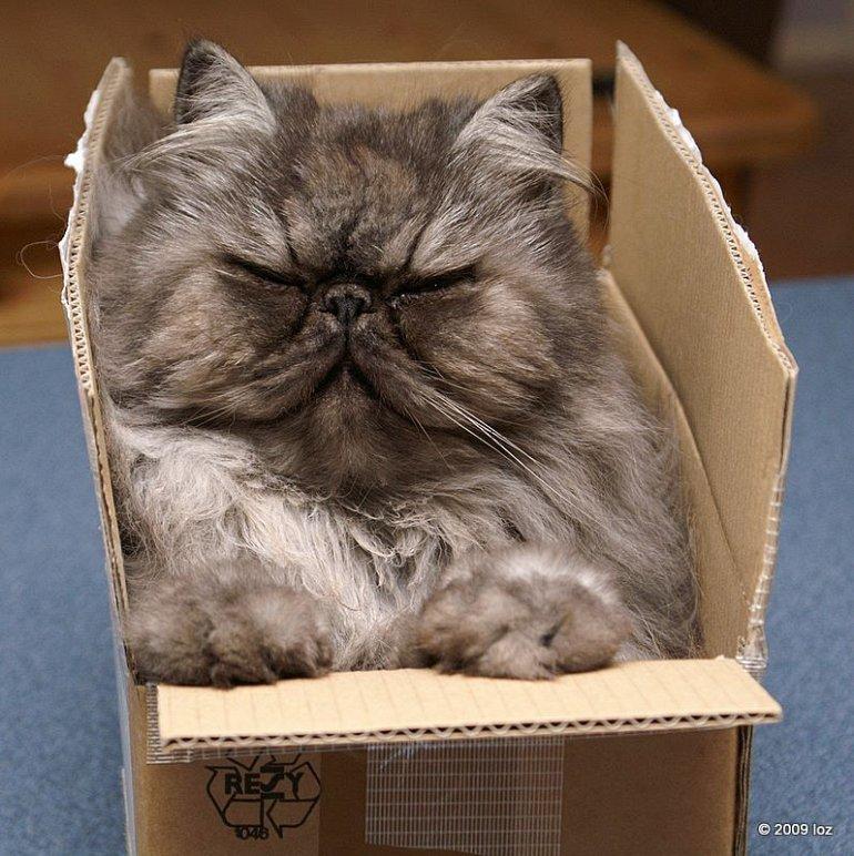 Коты в коробках