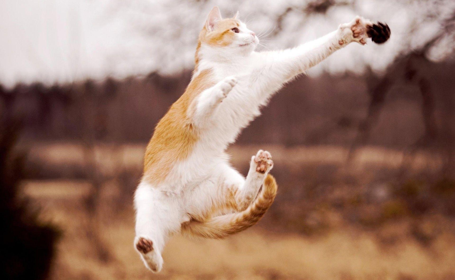 Радость картинки с кошками