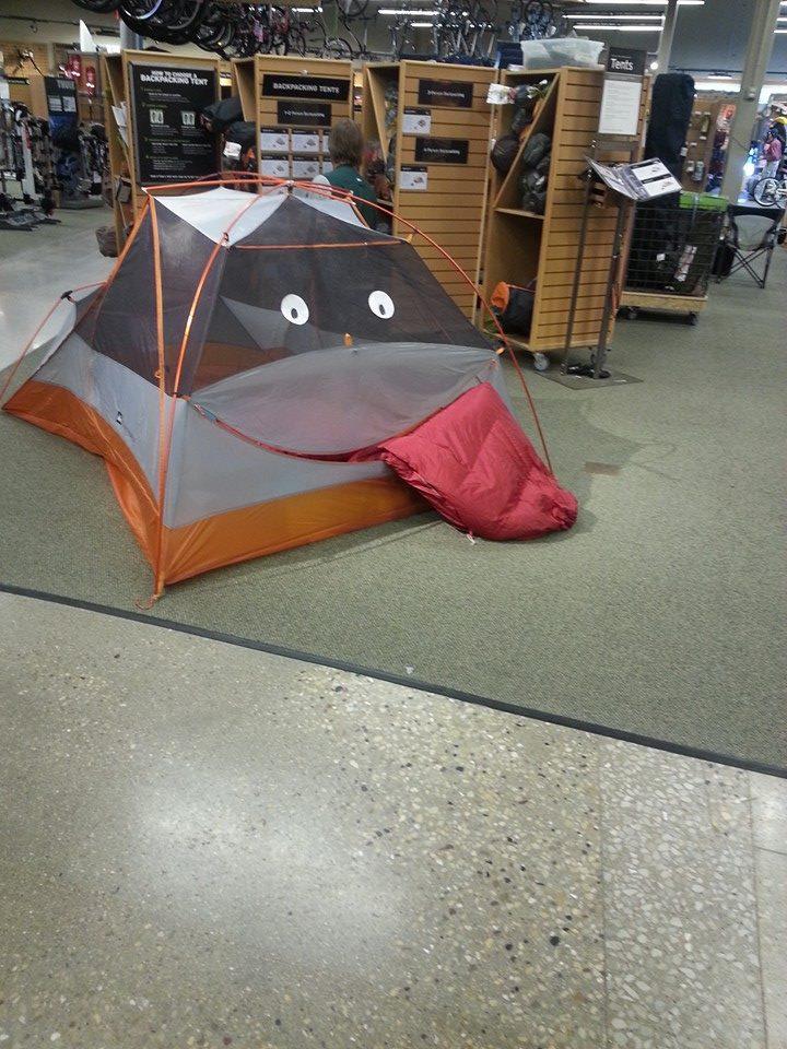 Прикольные картинки про палатку, смешные прикольные