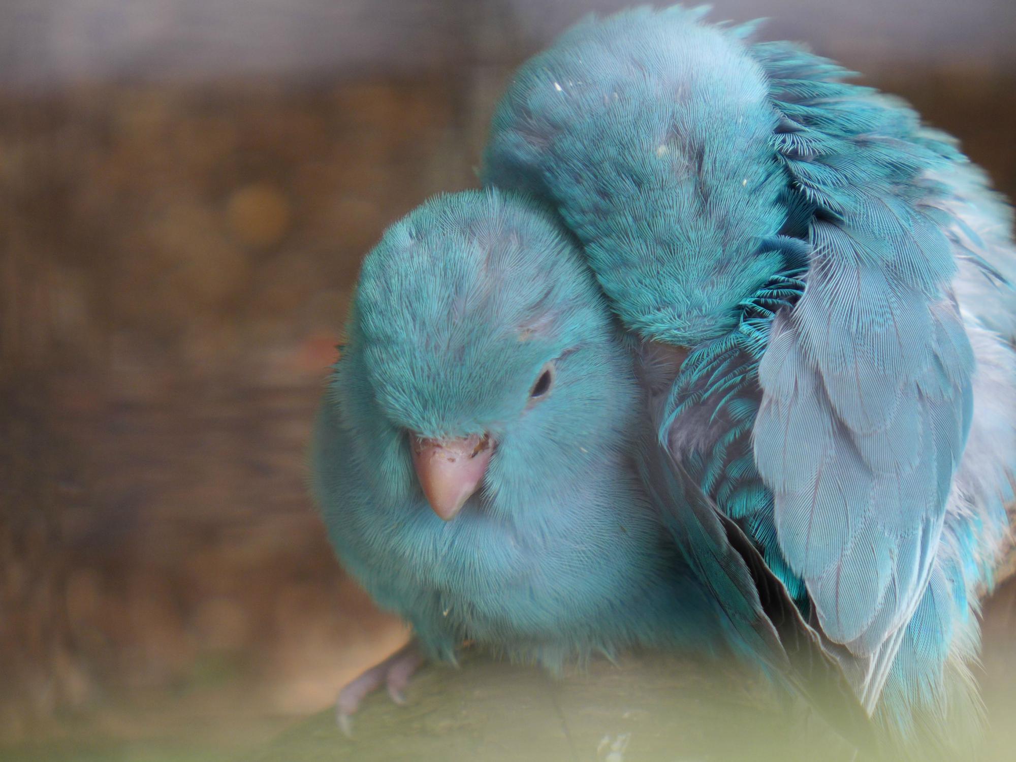 Доброе утро женечка картинки красивые с поцелуями один наших