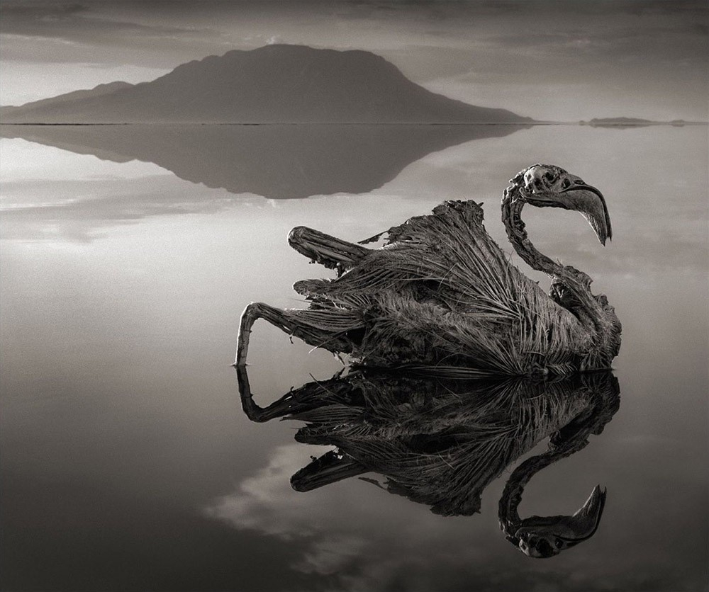 Природный феномен озера Натрон