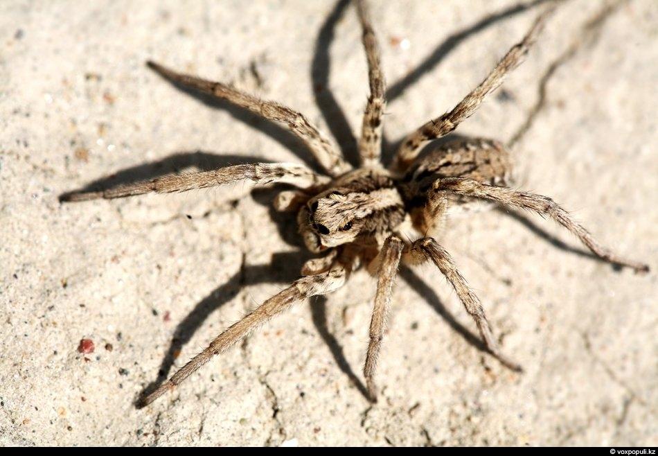 выполнен пауки белгородской области фото и названия праву можно назвать