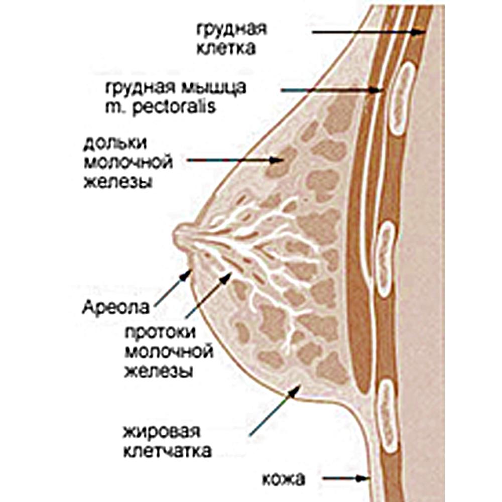 Негр женская грудь изнутри