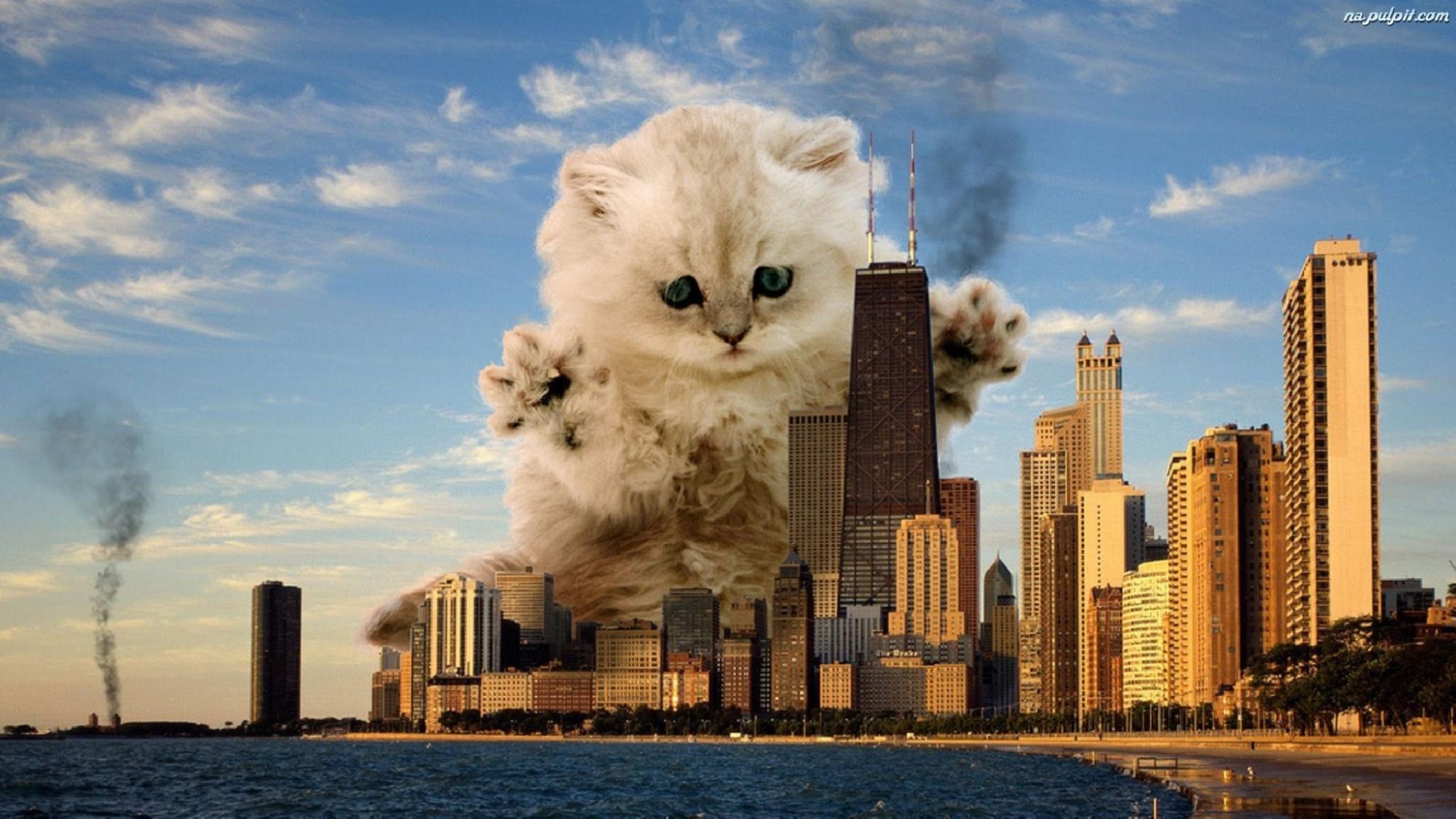 значения коты захватили мир картинки содержанию пектина малина