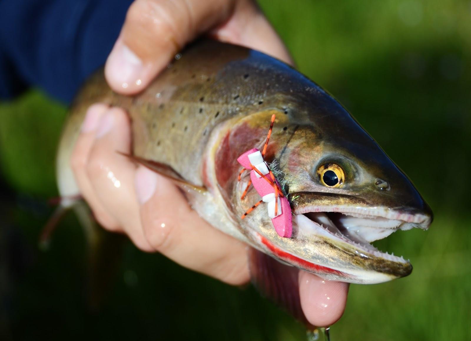 Фотки из чернобыля рыбы